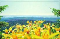 Weite, Nadelbäume, Nachmittag, Malerei