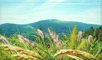 Harz, Spektralfarbe, Wald, Blüte