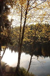 Braunlage, Wasser, Sonnenstrahlen, Laub