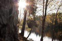 Landschaftsfotografie, Braunlage, Baum, Sonnenschein