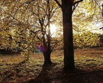Baum, Goldener oktober, Norddeutschland, Natur