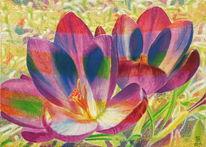Krokus, Natur, Frühling, Malerei