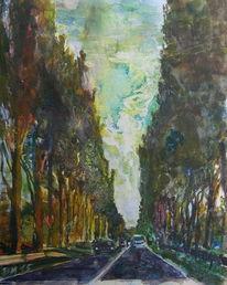 Straße, Baum, Homburg, Allee