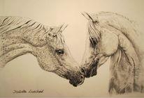 Kohlezeichnung, Zeichnung, Pferde, Schwarz weiß
