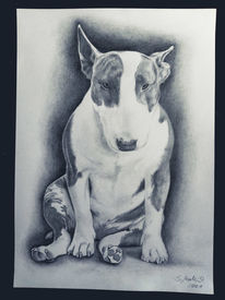 Hund, Bleistiftzeichnung, Tiere, Zeichnungen