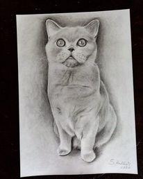 Bleistiftzeichnung, Auftragsarbeit, Zeichnung, Realismus