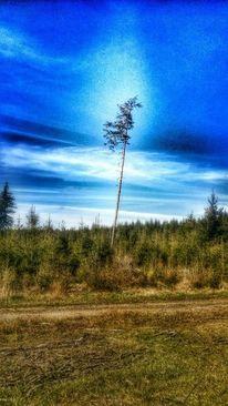 Himmel, Wqald, Wolken, Baum