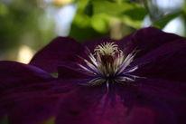 Pflanzen, Blüte, Flora, Makro