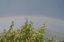 Sonne, Baum, Regenbogen, Natur