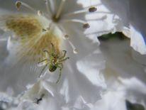 Spinnenetz, Pflanzen, Natur, Tiere
