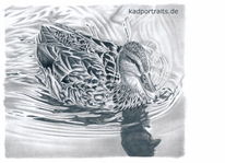 Bleistiftzeichnung, Ente, Wasser, Fluss