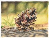 Kiefernzapfen, Wald, Frühling, Zeichnung