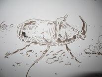 Käfer nashornkäfer, Zeichnungen, Tiere