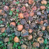 Apfel, Fotografie, Postkarten, Herbst