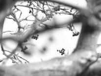 Natur, Baum, Blick, Fotografie