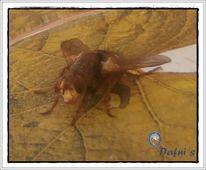 Fliege, Insekten, Schwebfliege, Digitale kunst