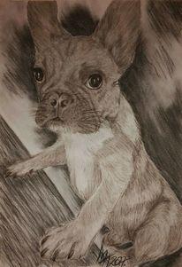 Hund, Französische bulldogge, Tiere, Portrait