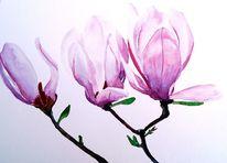 Blumen, Blüte, Magnolien, Aquarell