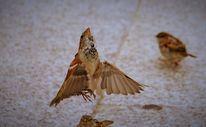 Tiere, Vogel, Fotografie, Lichtbilder
