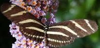 Schmetterling, Blumen, Muster, Fotografie