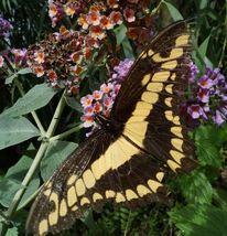 Schmetterling, Blumen, Blätter, Fotografie