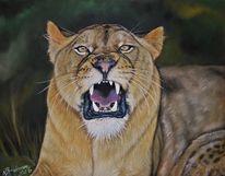 Löwe, Pastellmalerei, Großkatze, Zoo