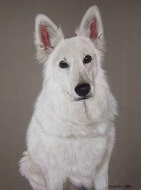 Hund, Weiß, Schäferhund, Pastellmalerei