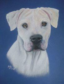 Hund, Pastellmalerei, Pastellpapier, Hundeportrait