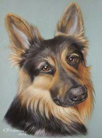Hundeportrait, Schäfer, Realismus, Pastellmalerei