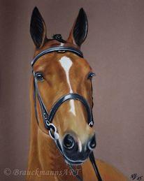 Pferde, Pferdeportrait, Tierportrait, Pastellmalerei