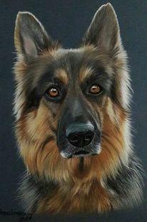 Schäfer, Hund, Pastellmalerei, Hundekopf