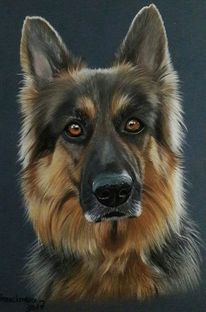 Hundeportrait, Hundekopf, Hund, Pastellmalerei
