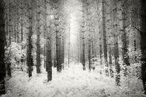 Schwarzweiß, Natur, Wald, Fotografie
