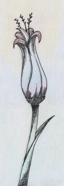 Blumen Stillleben Zeichnung 375 Bilder Und Ideen Zeichnen Auf