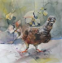 Neugier, Taube, Malerei, Vogel