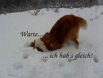 Lustig, Hund, Fotografie, Winter