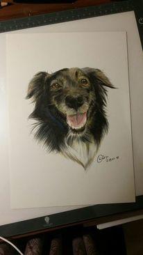 Tierportrait, Hund, Buntstiftzeichnung, Zeichnungen
