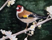 Vogel, Natur, Zeichnung, Aquarell
