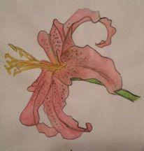 Blumen, Lilie, Aquarellmalerei, Pflanzen