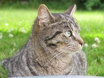 Fotografie, Katze