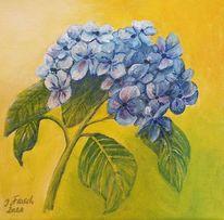 Blüte, Hortensien, Blaue blüte, Blumen