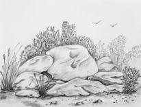 Strauch, Stein, Felsen, Pflanzen