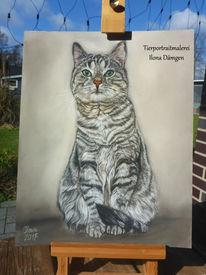 Pastellmalerei, Katze, Tigerkatze, Katzenportrait