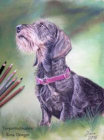Dackel, Hundeportrait, Rauhhaardackel, Pastellmalerei