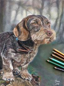 Hund, Rauhhaardackel, Tierportrait, Walddackel