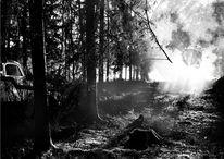 Digitalartwork, Licht, Wald, Druck