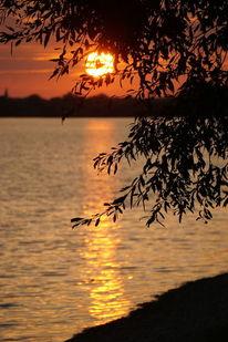 Baum, Ufer, Horizont, Fotografie