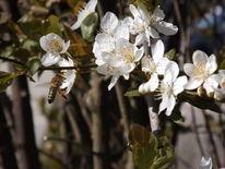Frühling, Blühen, Fotografie