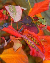 Kunterbunt, Fotografie, Herbst
