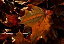 Glühen, Herbst, Laub, Fotografie